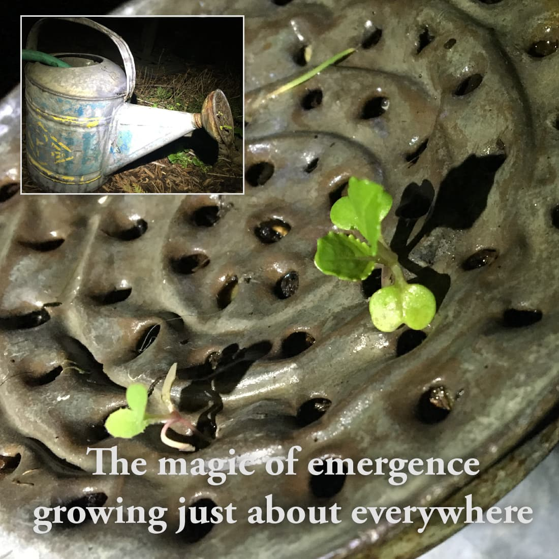 meme-watering-can-sprouts
