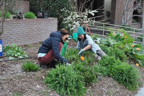 City Hall sows sustainable gardens – Daily Acts