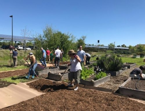 SRJC Petaluma Campus: B-Corps Workday