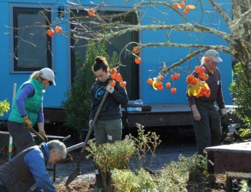 Homes for Sonoma Landscape Installation