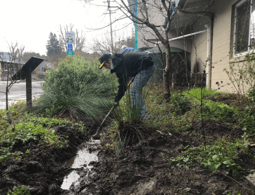 Cavanagh Food Forest Rain Tank Repair