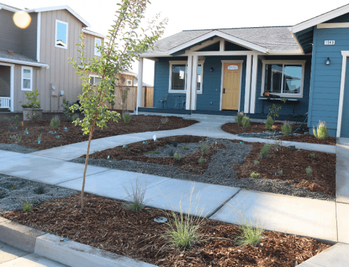 Coffey Park Front Yard Landscape Installations