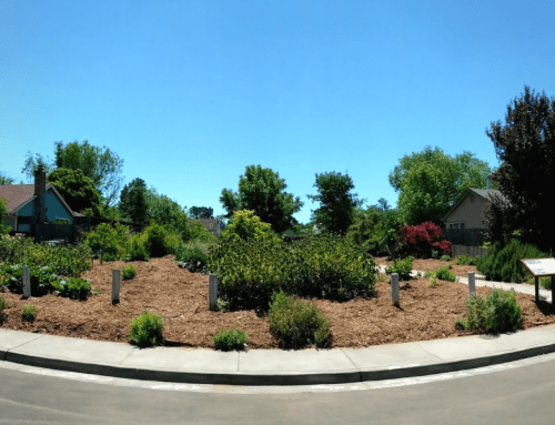 Pocket Park Revitalization – A Sheet Mulching Party